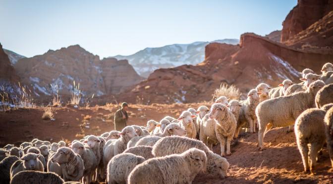 """""""Я есмь пастырь добрый; и знаю Моих, и Мои знают Меня."""" (Иоанна 10:14)"""